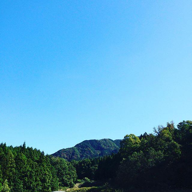 秋晴れの昼になりました!朝は、5℃で収穫出荷終わり、植え付け作業