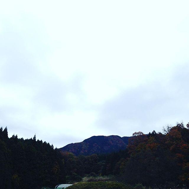 気温11℃の寒さはどこ?の朝です!今日は収穫祭イベントです!広告、テレビのとおり!