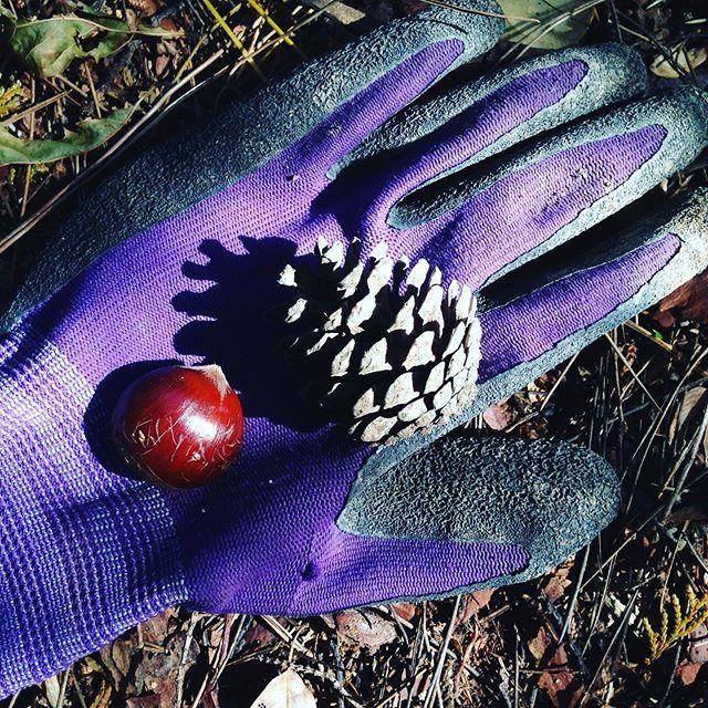 リス丸君の大好きな木の実がたくさん落ちてます!最近よく見かけますが、冬に入る為に毛並みか黒っぽくなって来ました。