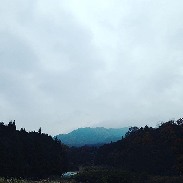 気温16℃で曇り空で、静かな畑の中に色々な鳥のさえずりが聞こえてます。