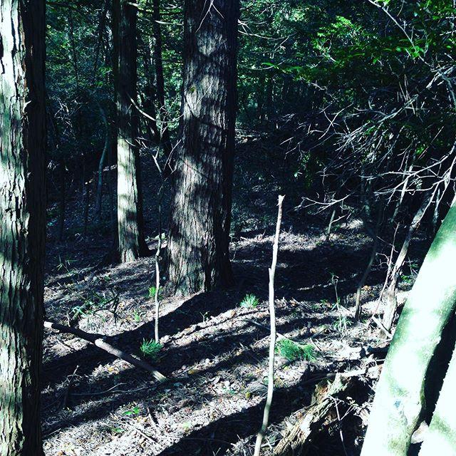 そろそろ、リス丸君達の森で木々を集めてハウスの暖房に使う季節になってきました。