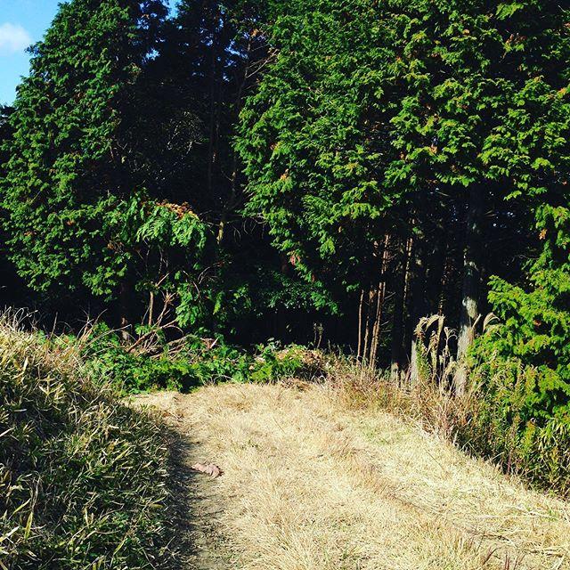 木こり作業!新しい道を作ります!