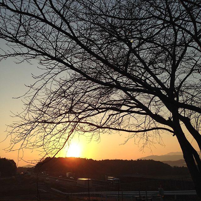 来年の春を待つ桜と夕焼け