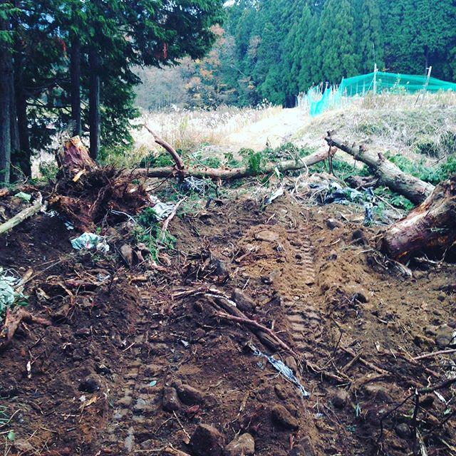本日の開拓は、木の根を取るだけで終わりました。