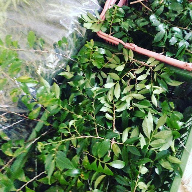 新しいお正月に仏壇用にも必要な収穫してます!