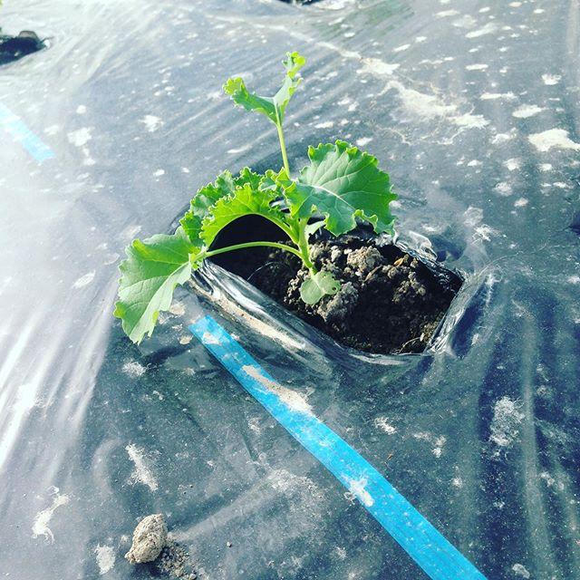 来年用の野菜も成長してます!