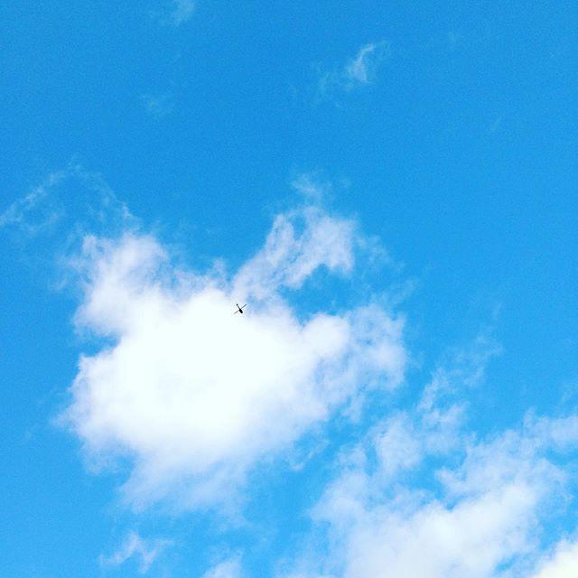 今日はうちの畑にアメリカ軍のヘリがたくさん飛んで行ってます!