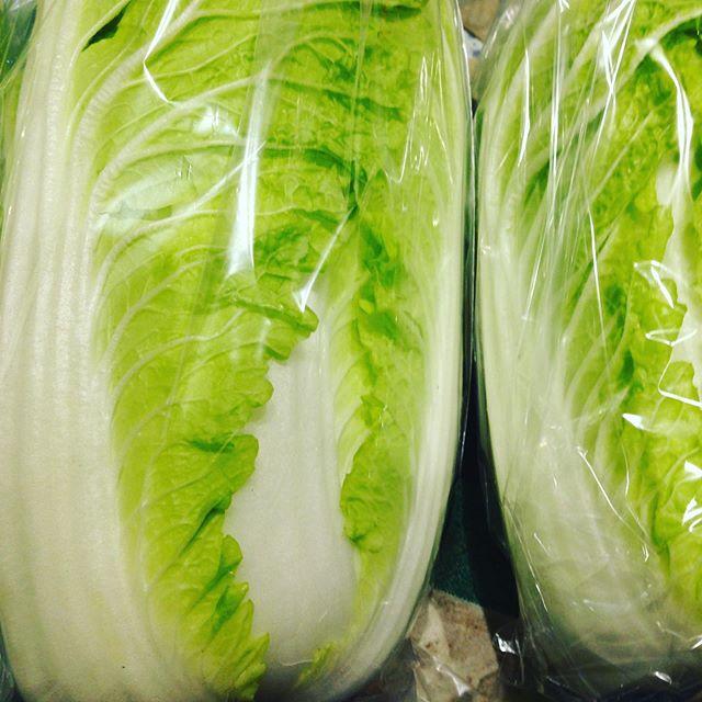 お客様に美味しい白菜はどれ?と聞かれました!白菜は品種が色々あるから手にとって見た方わかりやすいと伝えてます!見た目でっかいけど軽かったり小さくても重かったりします!旨味タンクは当然おのずと答えは出てきますね〜〜