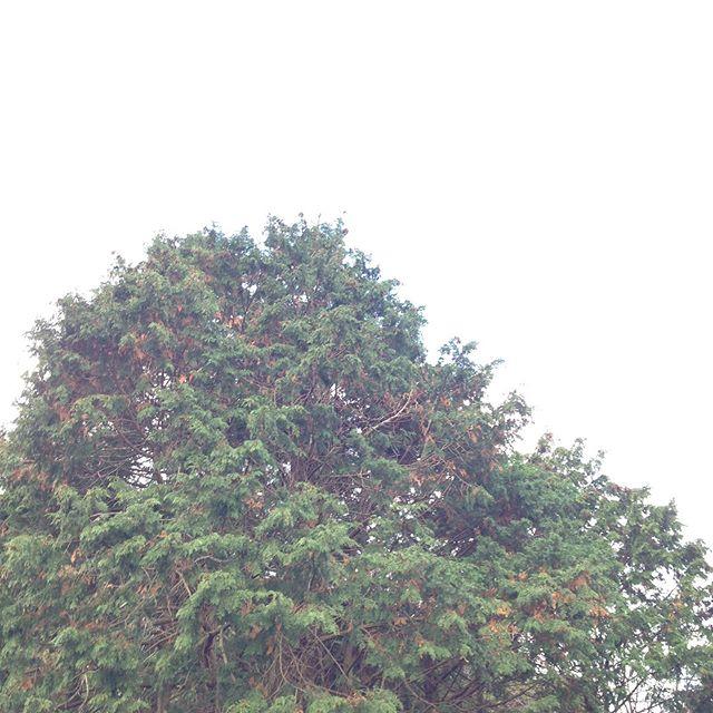 トムソーヤの冒険に出てくる秘密基地に相応しい木の配列を発見
