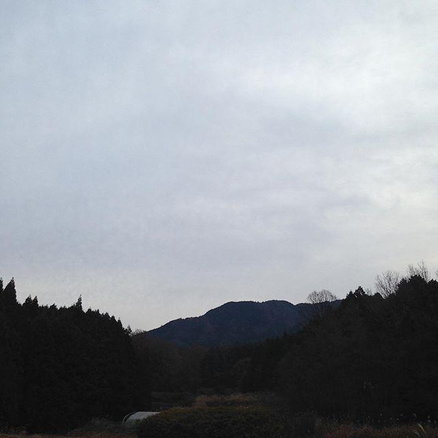 気温2℃曇り風はなくただ寒い朝です!明日の夜に雪の予報が出てますので寒気が入って来るのでしょうか?年末は、出荷は、31日年始は市場か開く5日まで止まります!ただ、畑は休みはありません!