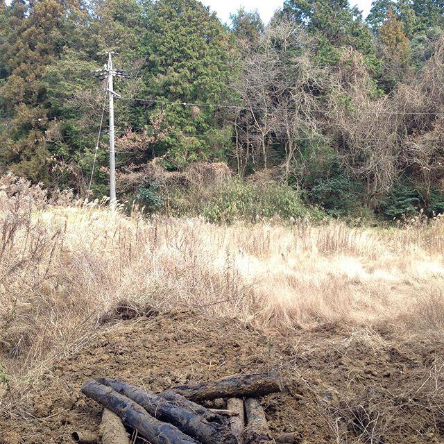 いつもの畑と別の畑で、毎年台風の被害を軽減する実証実験で、畦道を作ってます!