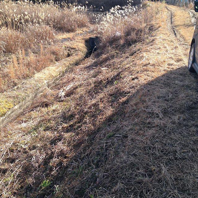 春への準備!ここ数日間通常通り収穫出荷したあとは、圃場の準備や畑や田んぼの準備が連日続いてます。特に機械が入れられない崖は手作業で大変です!何故草刈りするのか?一般の方は知りませんのが普通ですが、このまま放置するとやがて害獣が斜面を登り降りして崩落したり、ネズミが巣を作り、それを狙い連鎖反応が生じます!更に草の種は風に乗り都会で実りますし周りの杉の花粉を弾き皆様の症状に現れます!特に杉は、畦道や斜面に草と一緒に木が生えますので草刈りは重要な作業ですね〜