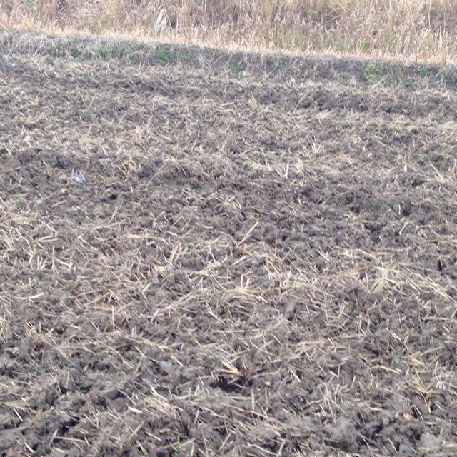 たくさんの鳥が虫の駆除しに来てます!あとはしっかり寒気と雨が土を作ります!