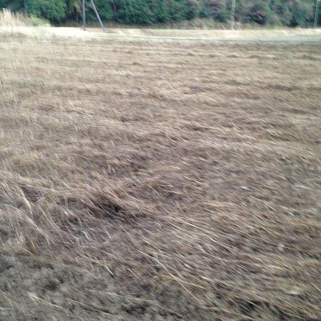日が少しだけ長くなりましたね〜草が生えて枯れた圃場を耕してます!あと半分
