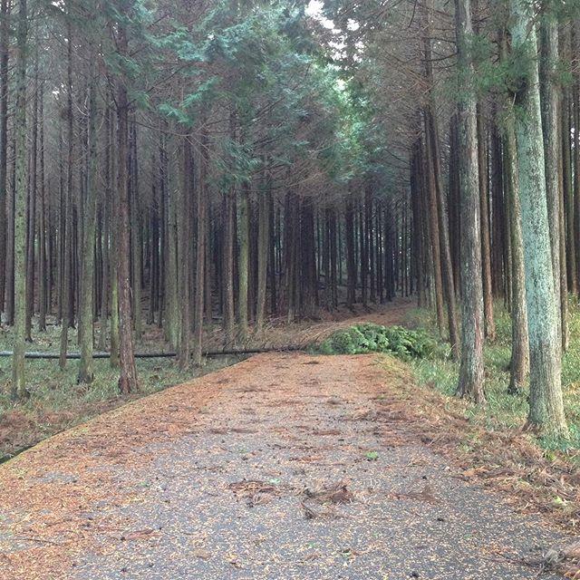 複数箇所で、30メートルを越す風で倒木