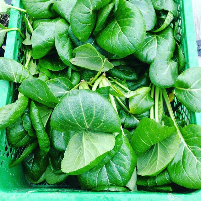 小松菜は色々な料理に使えるから何の食事に使うか考えてます。