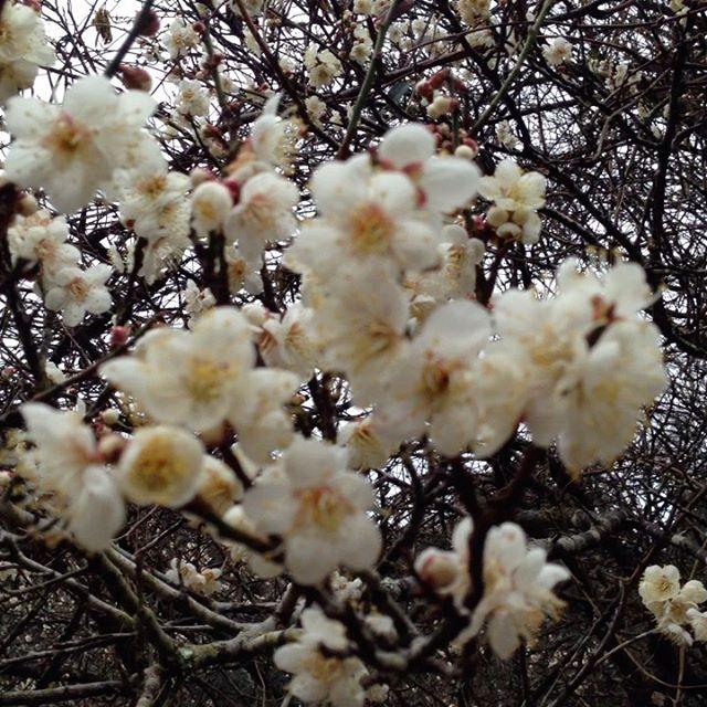 春に向かってます!畑の源流一級河川大谷川沿いにて