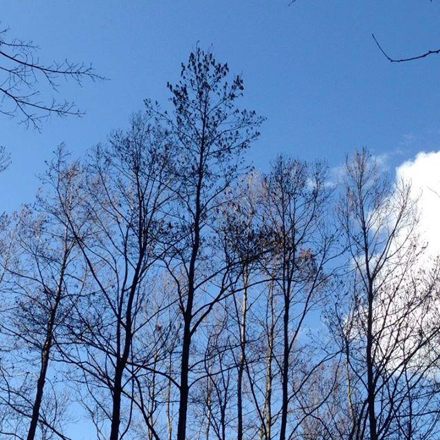 かなり突風が吹いて来ました!点検と対策をしてます!今のところ嵐の前に青い空が見えてます。
