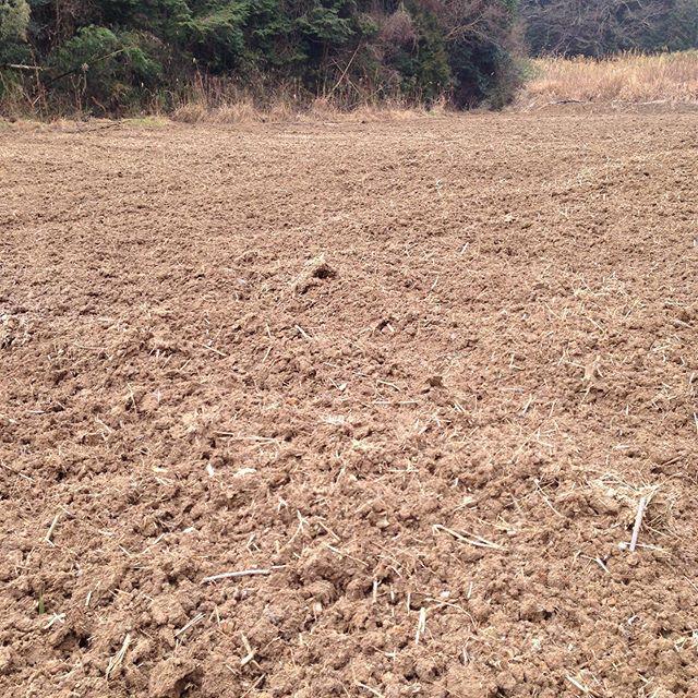 春、夏野菜の畑に来ました!天候と土、苗木の状態で畝を作ります!