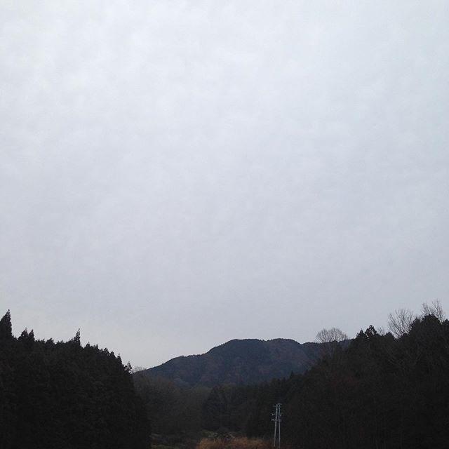 気温6℃風は無く曇りで、畑より低い場所は濃い霧でライトの点灯してます!予報は午後雨マークがついてました!