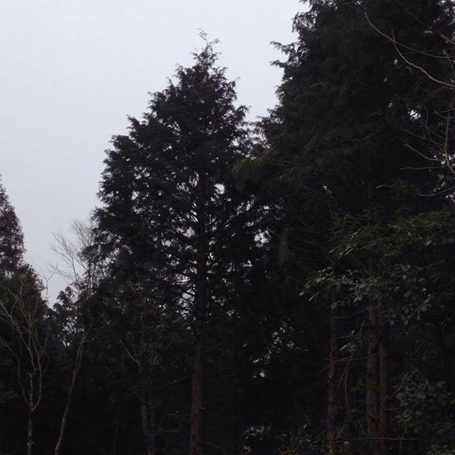 雨で畑作業は中断して高い木の枝を落としたり拾い集めたり