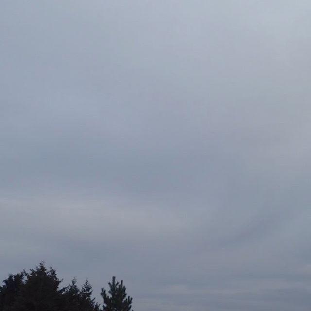 気温4℃風無し朝方霧雨ありましたが現在は降ってませんので色々収穫して準備して出荷!また、今日は雨の予報が出てるのでやるべき作業を行います。