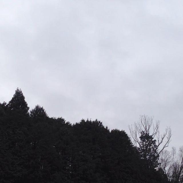 気温8℃西の風木が時より揺れてます。霧がかかって曇り空で昨日の雨で畑は濡れてます。