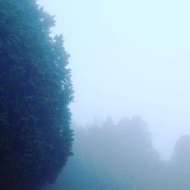 気温5℃風はなく霧が濃く雲の中になって時より雲海の天空です!畑は濡れてますが、収穫してます!日中は気温が上がる予報です!