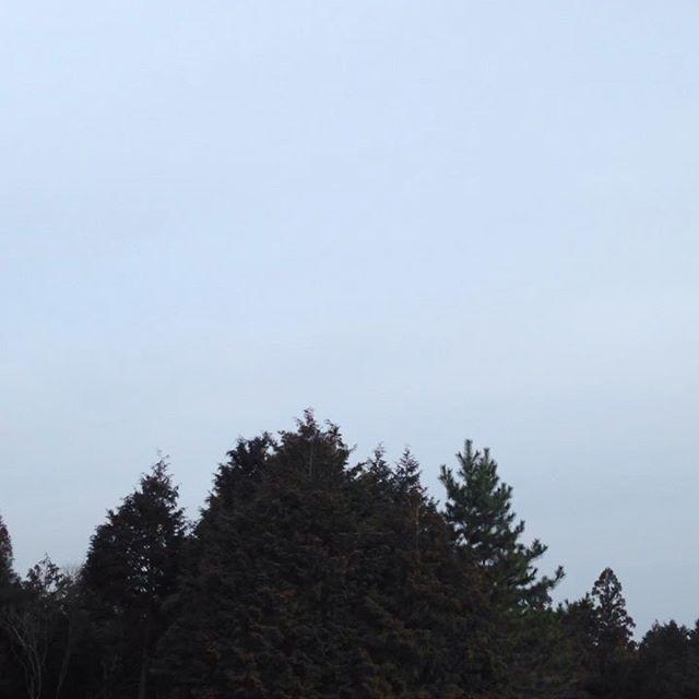 気温−1℃風は無く晴れ畑は冬に逆戻りで凍ってます。明日は雨の予報!本日もいつもの時間より遅めに出荷します。