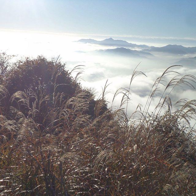 私と犬しか居ない低山の散歩!https://youtu.be/P0jSQOfBuxA#犬散歩 #犬 #散歩 #山 #三重県
