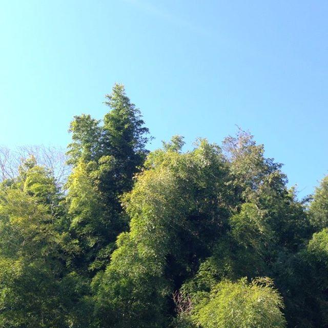 晴れて様々な鳥のさえずりが聞こえます!キツツキの食事の音などビート安定してます。山の点検