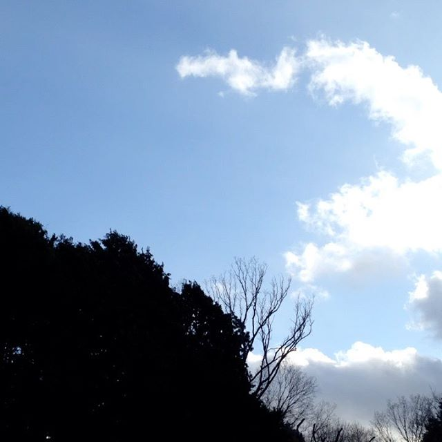 猛烈な風で体感温度も気温5が1℃に感じます!明日の朝は–2℃予報で、対策完了