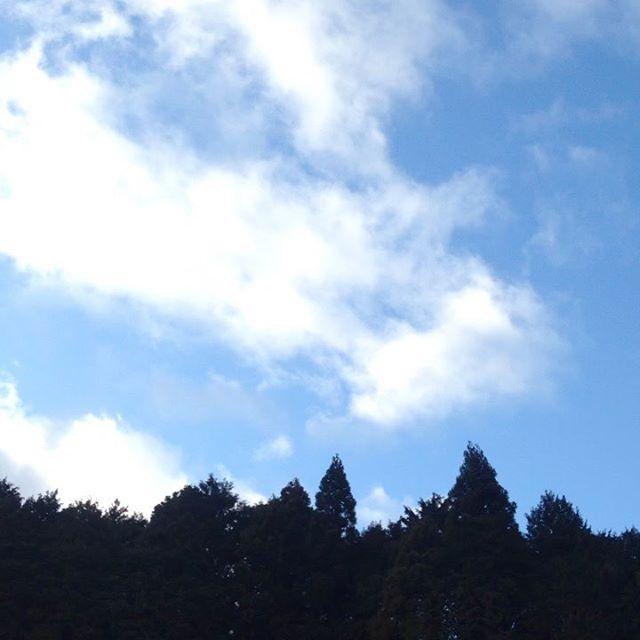 気温9℃西の風が木々を揺らしてます。畑は前日の雨で濡れます。