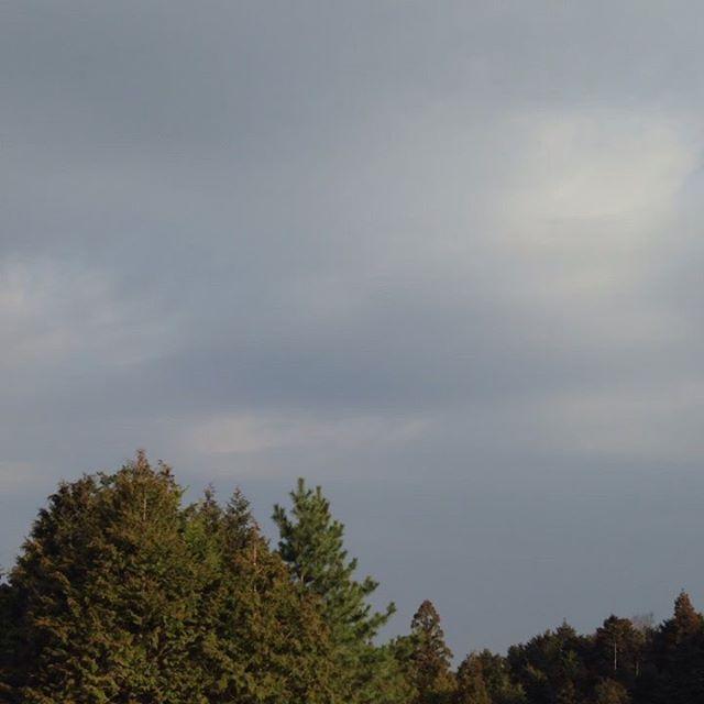 気温8℃西の風微風晴れて朝から気温が上昇してます!今日も収穫出荷します。