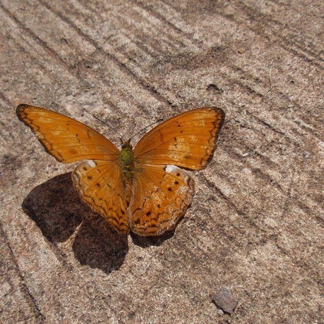 タイ パンシダ国立公園にて撮影