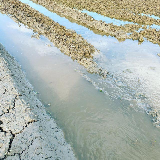 田んぼに水を入れて代掻き5月中に全て終わらせます。