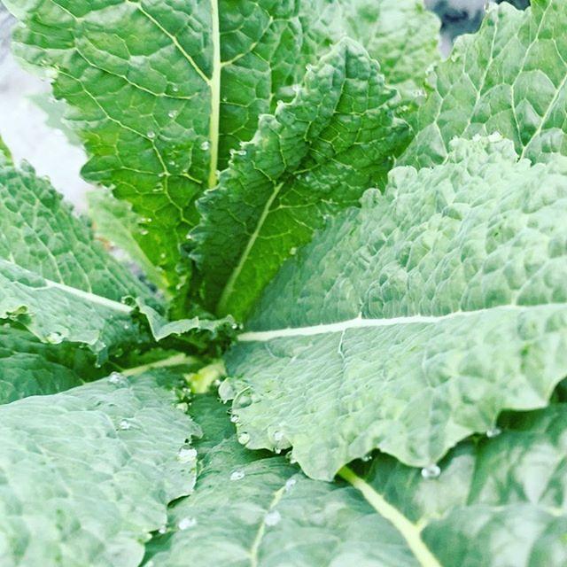 曇り空で、時より霧雨です。今日もお野菜を収穫出荷してます!