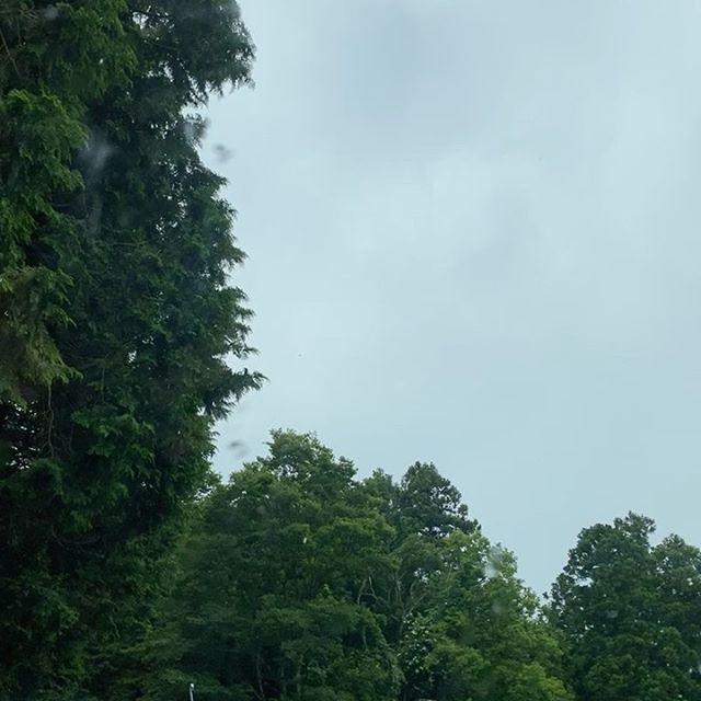 今日から本気の雨になる予報で、降る前ギリギリ収穫しました!今からパック詰めして出荷します。