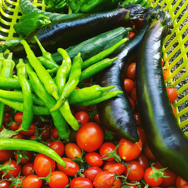 梅雨の休みですかね?🌞気温19℃から晴れてぐんぐん気温が上昇してますいよいよ今年も半分過ぎてラスト半分が始まりましたね色々とありますが頑張っていきましょう今日も通常通り収穫出荷してます。